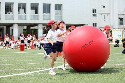 http://www.kamakura-u.ac.jp/sys/elementary_news/images/20180609%20%284%29.jpg